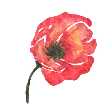 watercolor poppy flower isolated on white background, vector format