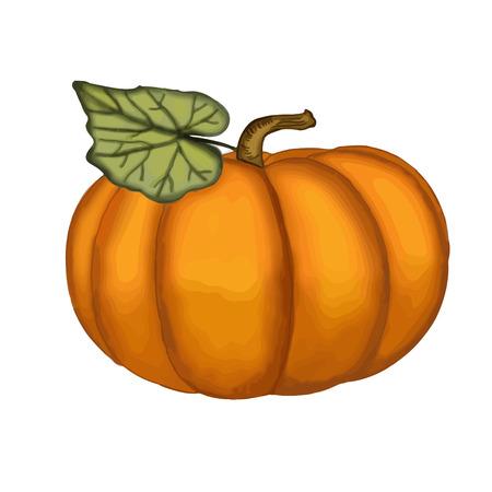 Hand drawn watercolor pumpkin, vector format