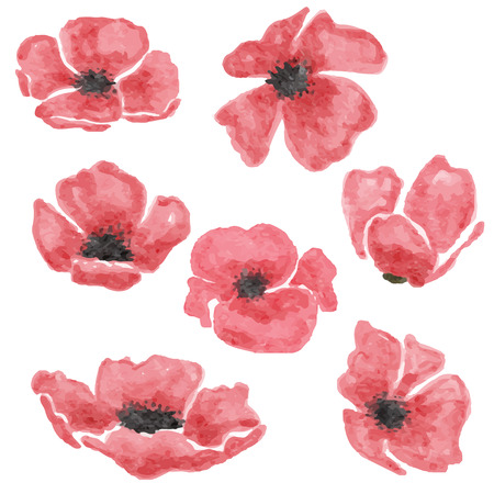 watercolor poppy  flowers set  isolated on white background, vector format