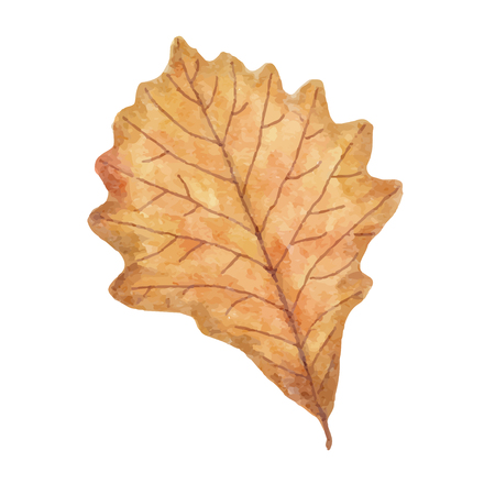 Watercolor autumn leaf isolated on white background, vector format