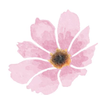 Fleur de cosmos aquarelle isolé sur fond blanc, format vectoriel