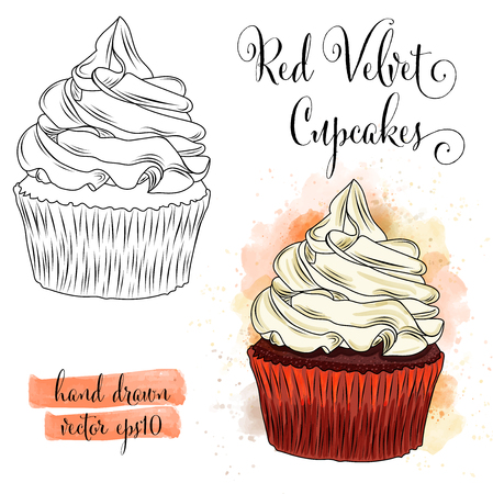 Beautiful hand drawn watercolor red velvet cupcakes. Vector format