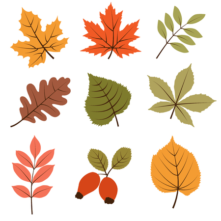 Autumn leaves collection isolated on white background, vector format  イラスト・ベクター素材