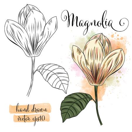 botanical art watercolor magnolia flower, vector format