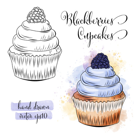Beautiful hand drawn watercolor cupcakes with blackberries. Vector format