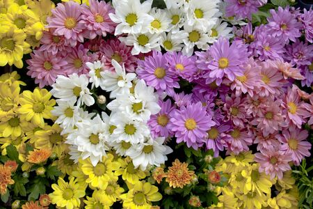 colorize: Background of colorful flowers