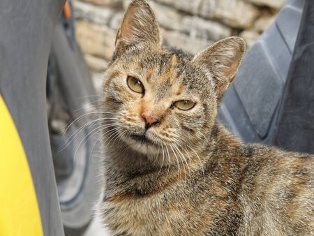 Homeless animals series. A portrait of a stray cat in Greece Stock Photo - 16845251
