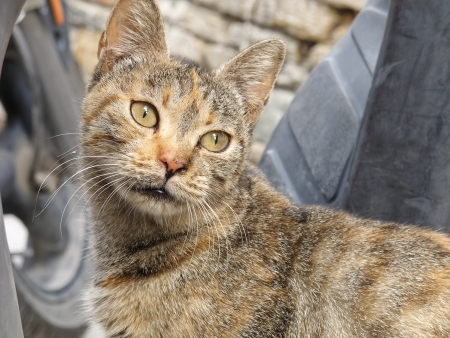 Homeless animals series. A portrait of a stray cat in Greece photo