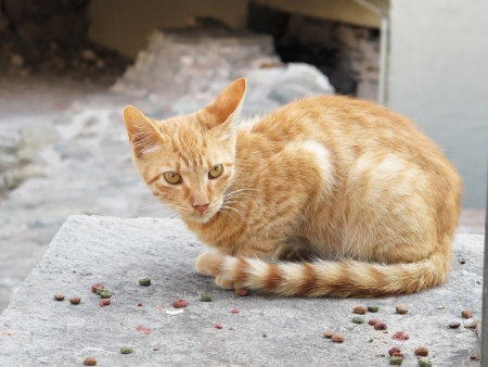 Homeless animals series. A portrait of a stray cat in Greece Stock Photo - 16845253