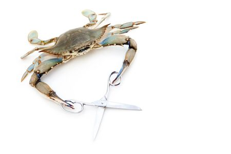 Blue crab holding a scissors photo