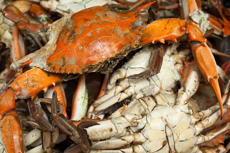 Pile of freshly steamed blue crabs photo