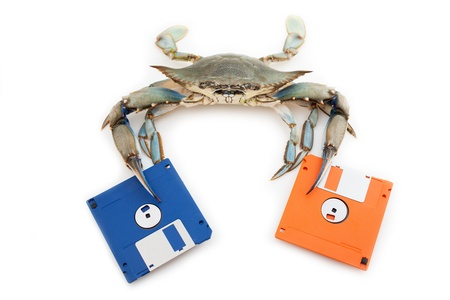 floppy disk: Blue crab holding a floppy disk Stock Photo