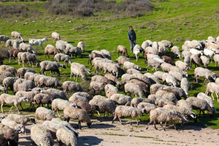 PORTO LAGOS, GREECE-NOV 11: Unidentified shepherd with his herd of sheep in the area of Rodopi on Nov 11, 2012 in Porto Lagos, Greece. The lives of these people find it difficult day by day from the crisis Stock Photo - 18112997