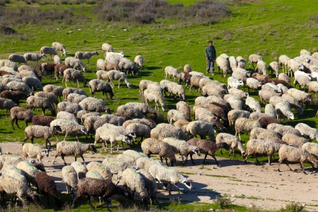 PORTO LAGOS, GREECE-NOV 11: Unidentified shepherd with his herd of sheep in the area of Rodopi on Nov 11, 2012 in Porto Lagos, Greece. The lives of these people find it difficult day by day from the crisis Stock Photo - 18112998