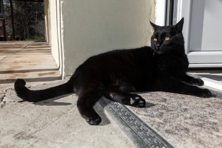 Black cat sitting on the door step in front of the house photo