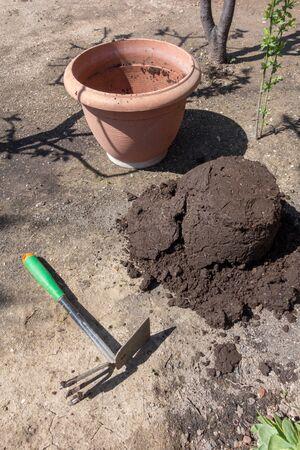 potting: Flower pots, potting soil and plants