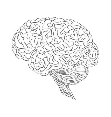 psychiatrist: Human brain