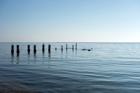abandon: Group of seagulls holding on abandon pillars