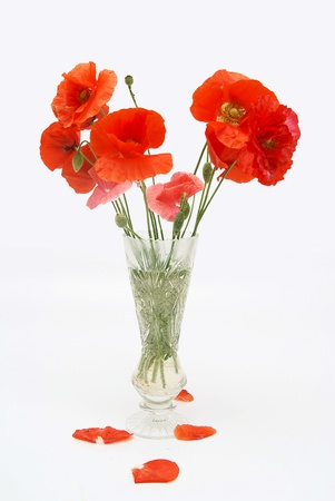 Bouquet of poppies in a crystal vase photo