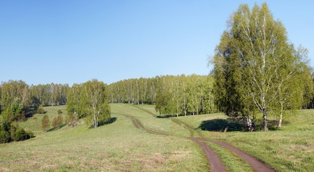 Horizontal summer landscape with fresh green grass and woods photo