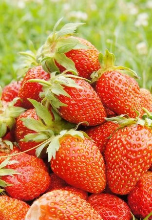 Large strawberries on the green grass Stock Photo