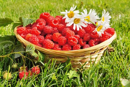 Fresh ripe raspberry on the green grass background Stock Photo
