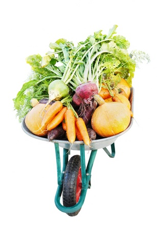 cucurbit: The new harvest. Many different vegetables lie in the garden cart. Isolated on white background