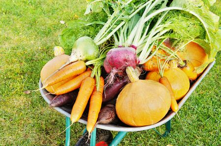 cucurbit: The new harvest. Many different vegetables lie in the garden cart