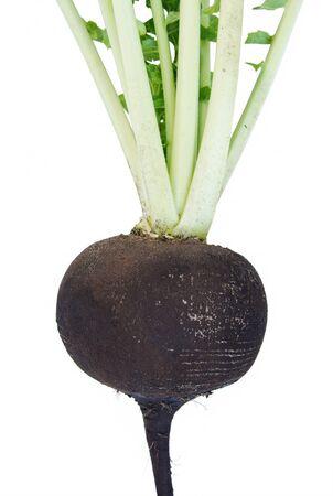 Black radish photo