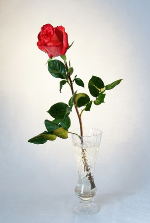 Single red rose in a crystal vase photo