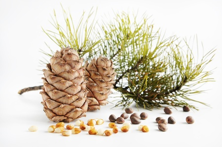 Cedar cones and nuts Stock Photo