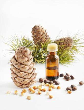 el cedro: Frutos secos y aceite de cedro