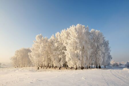 Winter beautiful landscape with trees covered with hoarfrost photo