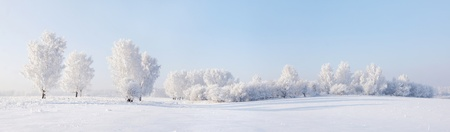 Winter beautiful landscape with trees covered with hoarfrost Standard-Bild