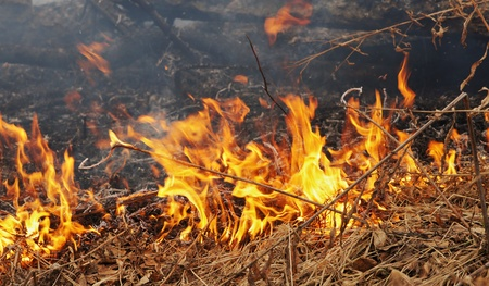 Burning dry grass in a forest photo