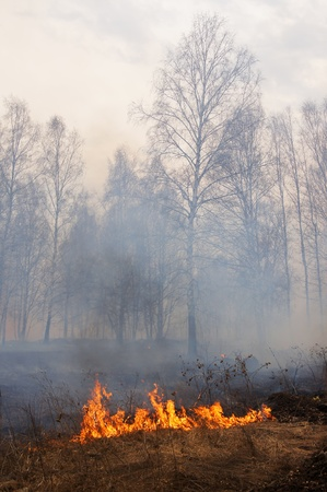 act of god: Fire in a forest