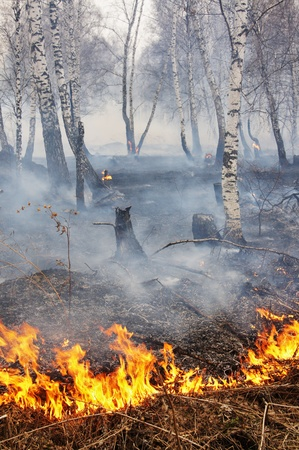 act of god: Fire in a wood