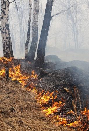 act of god: Act of God. Burning forest Stock Photo