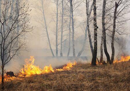 act of god: Burning forest Stock Photo