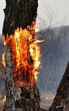 act of god: Burning tree in the forest