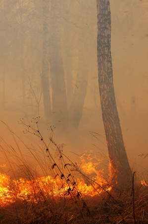 act of god: Burning trees in the forest