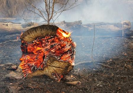 gebrannt: Feuer in einem Holz