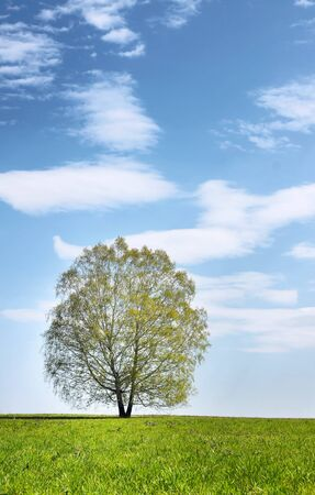 Summer landscape with lonely tree against blue cloudy sky photo