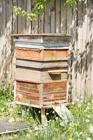 apiary: Beehives in the apiary
