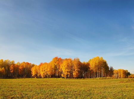 Beautiful autumn landscape in a  field photo