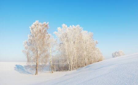 Sunny winter landscape with white trees photo