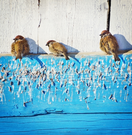 bask: Sparrows bask under the sun Stock Photo