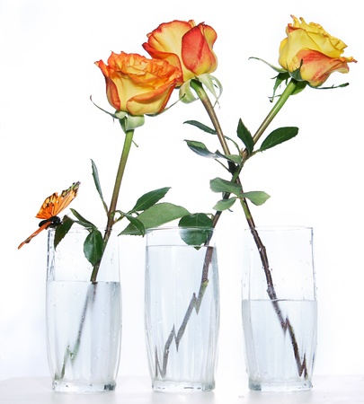 Three roses in glasses photo
