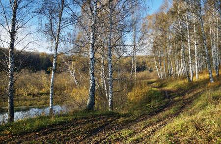 Dirt way in an autumn wood photo