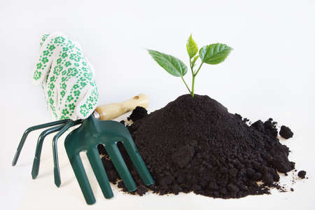 Horticulture concept over white background Stock Photo